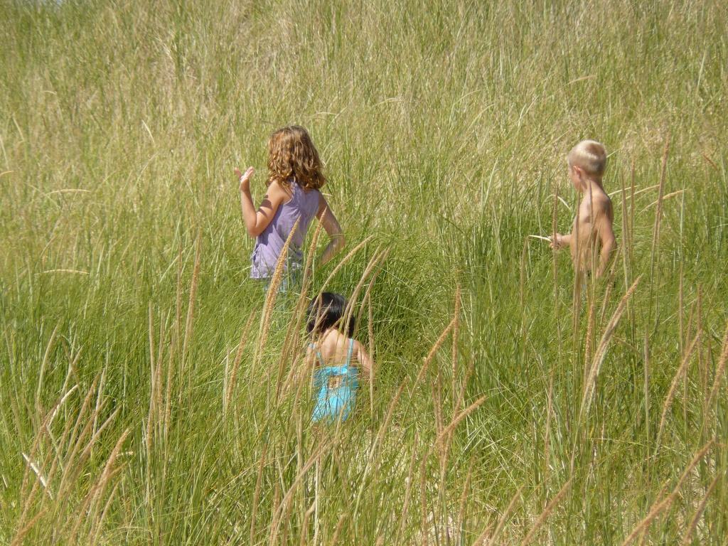 Grasses LILy P1050282